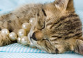 Free Sleepy Cat Stock Photos - 2005833