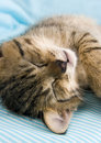 Free Sleepy Cat Stock Photos - 2005843
