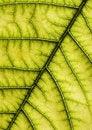 Free Leaf Background Royalty Free Stock Image - 2006206