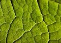 Free Leaf Background Stock Photos - 2006263