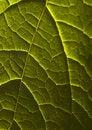 Free Leaf Background Stock Image - 2006271