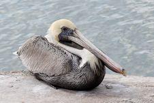 Free Beak In Oblique Stock Image - 2000961
