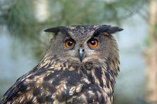 Free Beautiful Owl Stock Photography - 2003222