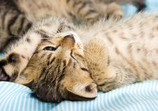 Free Happy Cat Stock Photography - 2005782