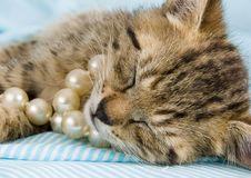 Free Sleepy Cat Stock Photos - 2005833