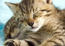 Free Sleepy Cat Royalty Free Stock Photography - 2005837