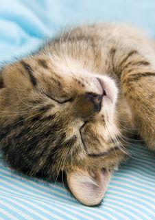 Free Sleepy Cat Stock Photos - 2005843