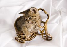 Free Crazy Cat Royalty Free Stock Photos - 2005988
