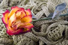 Free Composition With Flowers. Royalty Free Stock Image - 2006106