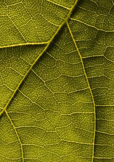 Free Leaf Background Royalty Free Stock Photography - 2006157