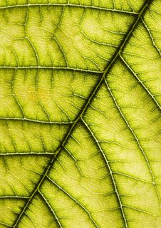 Free Leaf Background Royalty Free Stock Image - 2006206