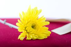 Free Composition With Flowers. Stock Photography - 2006252