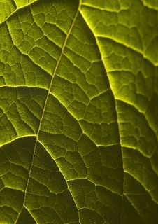 Free Leaf Background Stock Image - 2006271