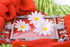 Free Composition With Flowers. Stock Image - 2006691