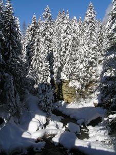 Free Snow Covered Trees Stock Photos - 2006973