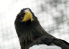 Free Eagle Stock Photography - 2008372