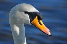 Free White Swan On Blue Lake Stock Images - 2008764