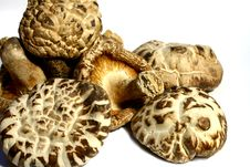 Free Dried Mushroom Stock Images - 2009494