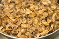 Free Fried Mushrooms Stock Photos - 20008263