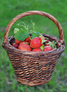 Free Basket With A Strawberry Against A Grass Stock Image - 20008911