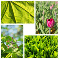 Free A Collage Of Decorative Plants Royalty Free Stock Images - 20009759