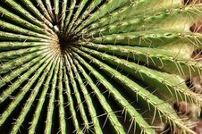 Free Thorny Cactus Royalty Free Stock Photos - 20001558
