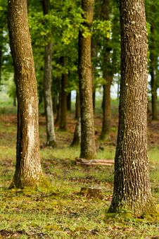 Free Forest Royalty Free Stock Photos - 20001808