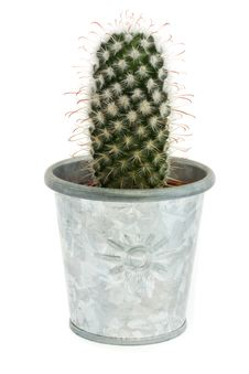 Free Single Cactus In A Silver Pot Over White Royalty Free Stock Image - 20002116