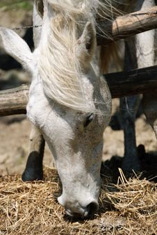 Free Horse Stock Photography - 20004982