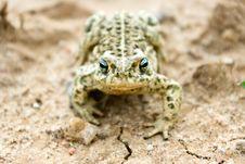 Free Frog Royalty Free Stock Image - 20006086