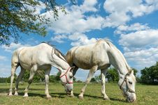 Free Horse Royalty Free Stock Photography - 20006137