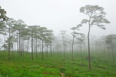 Mysterious Foggy Stock Photos