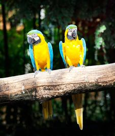 Free Couple Macaw Stock Photos - 20006813