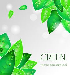 Free Abstract Natural Background Stock Photos - 20008063