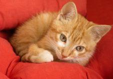 Free Kitten Stock Images - 20008494
