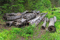 Free Old Logs In The Forest Royalty Free Stock Photos - 20010858