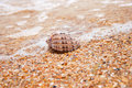 Free Beautiful Sea Shell  On The Sand Stock Image - 20013291