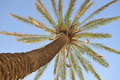 Free Beautiful Palm Tree Over Blue Summer Sky Stock Images - 20015024