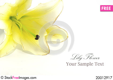 Free White Lily Isolated On White Royalty Free Stock Photography - 20012917