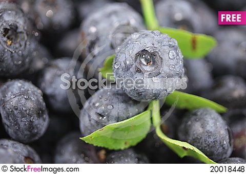 Blueberry Texture Stock Photo