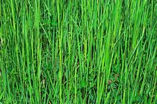 Free Green Grass Background Royalty Free Stock Photos - 20010938