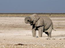 Free Elephant In Etosha Park Royalty Free Stock Photos - 20011158