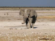 Free Elephant In Etosha Park 2 Stock Photo - 20011160
