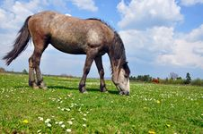 Free Horse On A Summer Pasture Stock Photos - 20011853