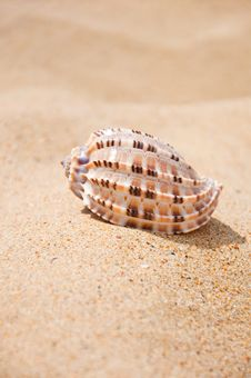 Beautiful Sea Shell  On The Sand Stock Images