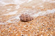 Beautiful Sea Shell  On The Sand Stock Image