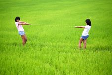 Free Tug Of War Between Two Young Women In Paddy Field Royalty Free Stock Image - 20013876