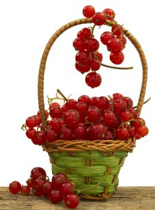 Free Red Currants Stock Photography - 20014242