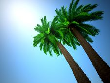 Free Palm Tree Royalty Free Stock Image - 20014576