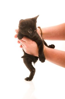 Free Adorable Young Cat In Woman S Hand Royalty Free Stock Images - 20014789